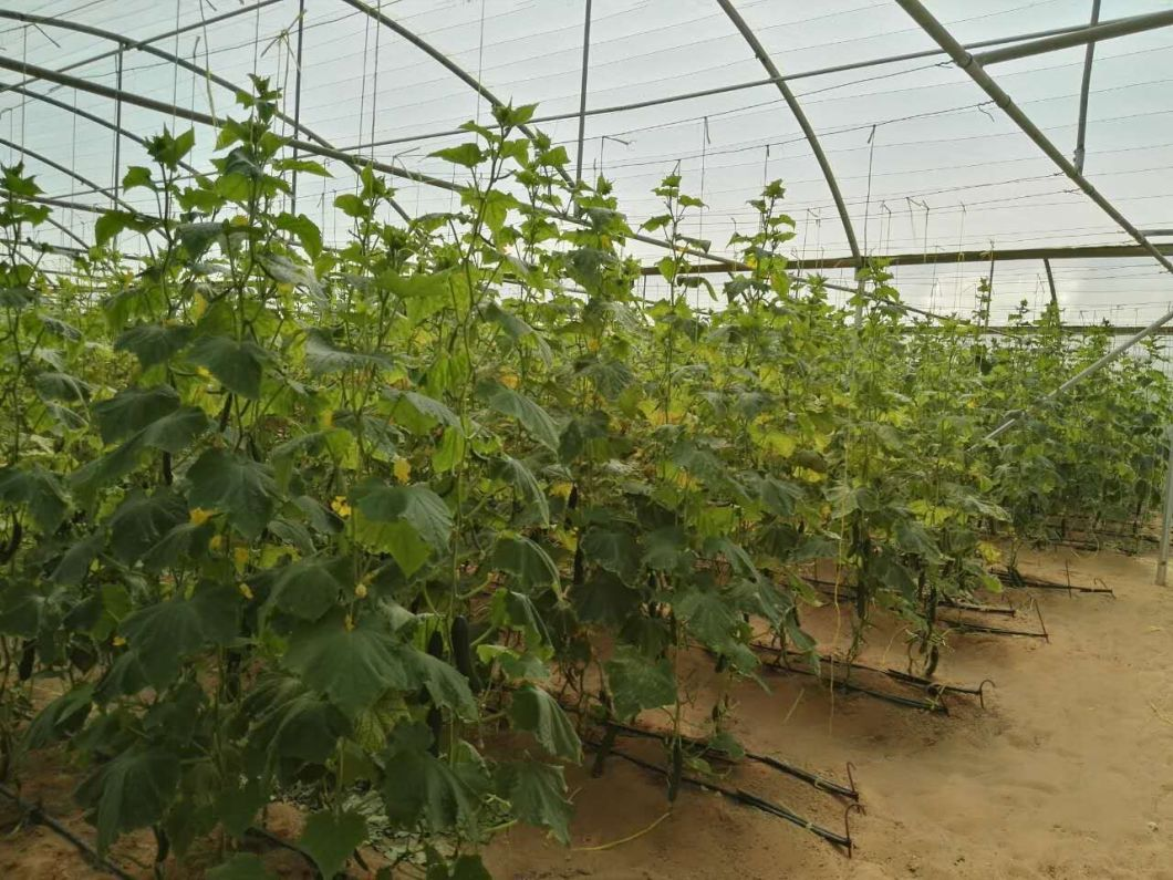 1mm PP Tomato Packing Twine