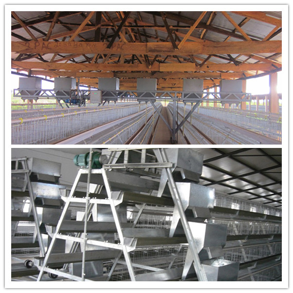 Battery Chicken Cage / Egg Chicken Cage / Automatic Chicken Layer Cage
