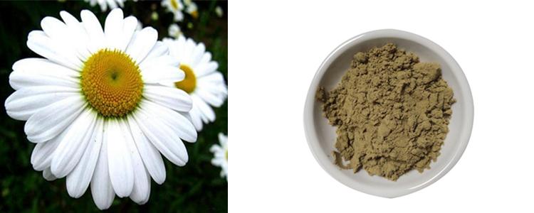 Pyrethrum Extract Powder