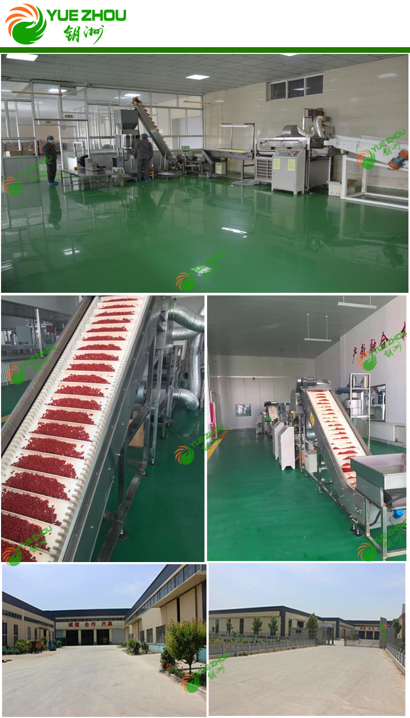 China Goji Organic Goji Berry 160 PCS Per 50g