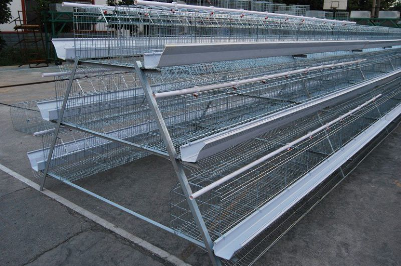 Chicken Cage for Laying/Broiler