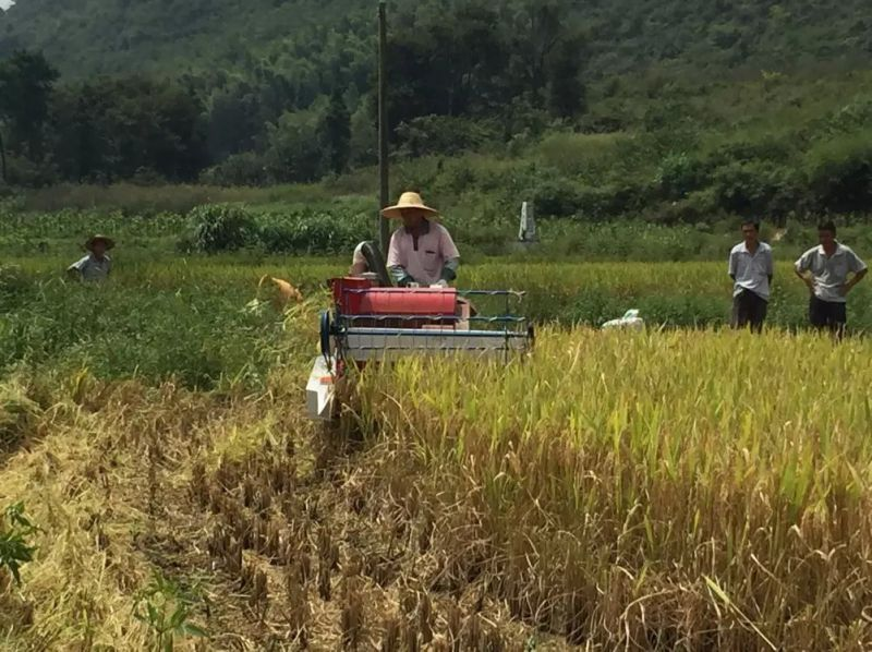 Cheap Price of Mini Rice Harvester for Sale