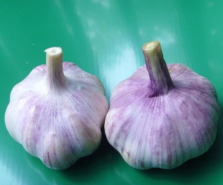 Fesh Peeled Garlic For Sale