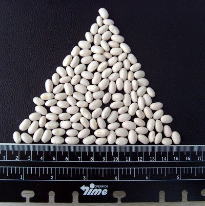 Export Top Quality White Kidney Bean