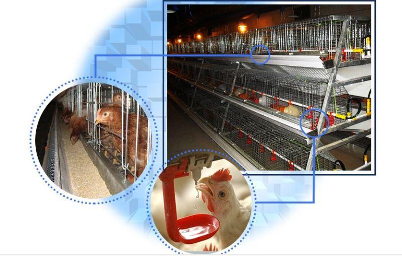 New Design a Frame Pullet Chicken Cage