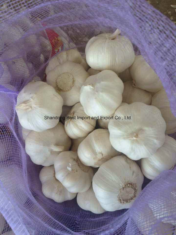 2016 New Fresh Pure White Garlic