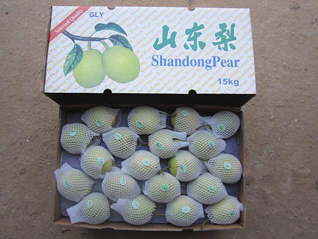 Green Shandong Pear New Crop