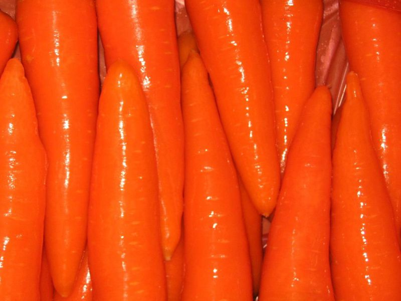 2016 Winter Crop Fresh Carrot