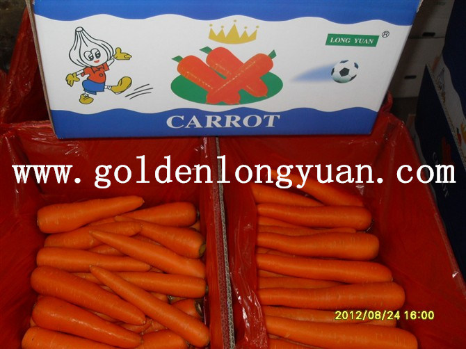 High Quality Fresh New Crop Carrot