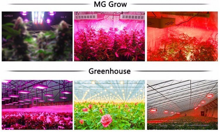 Hot Selling High Quality Low Prices 50W LED Growl Light in Graden