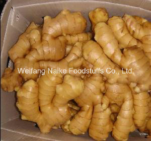 2016 Export Fresh Ginger in 20 Kg Mesh Bag with Lowest Price