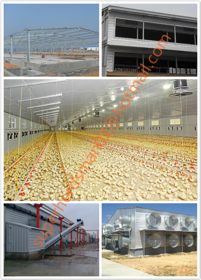 Galvanized Steel Structure Shed for Broiler Chicken