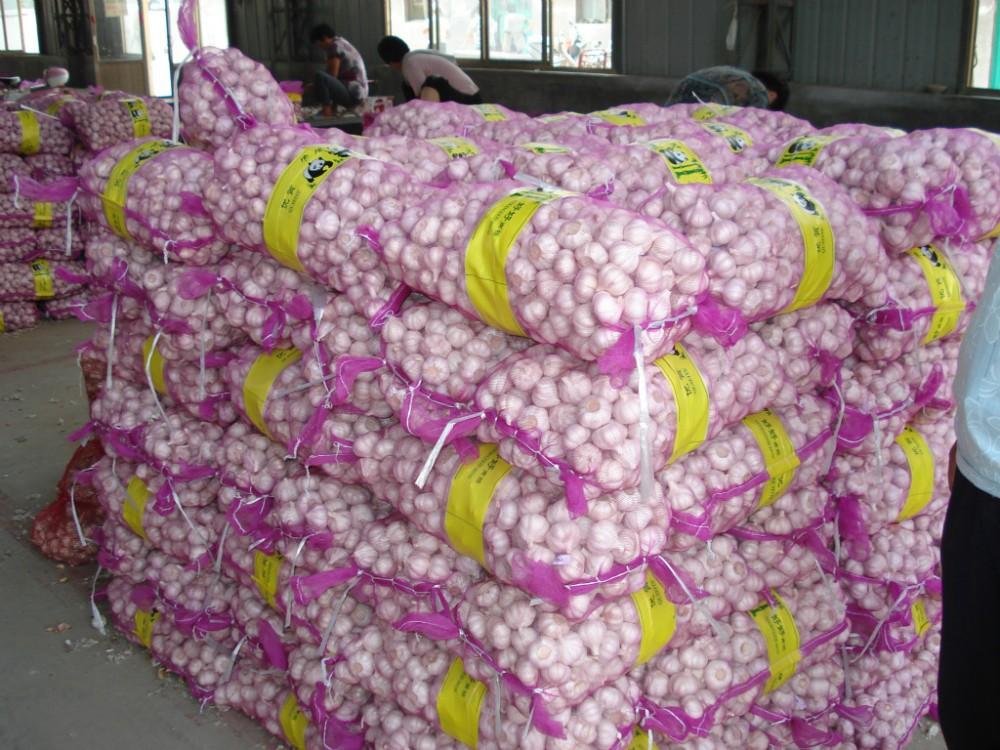 New crop natural fresh normal white garlic
