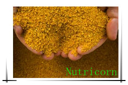 Corn Gluten Meal for Fish Feed