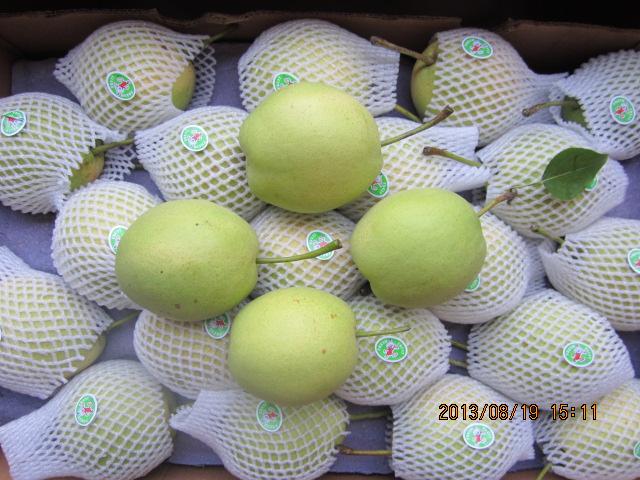 Green Color Health Shandong Pear