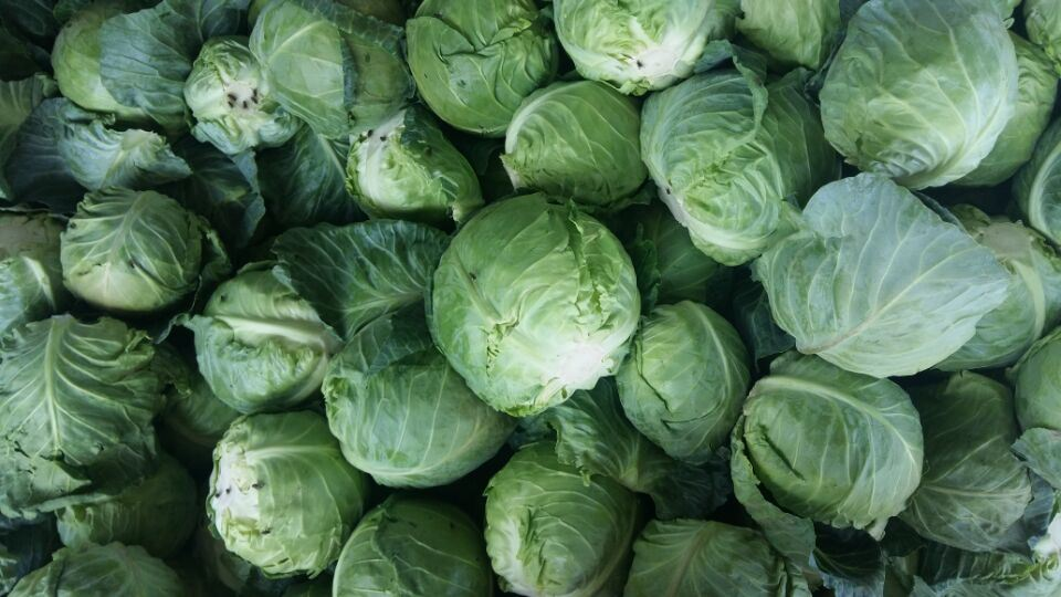 2018 New Crop Fresh Chinese Green Cabbage