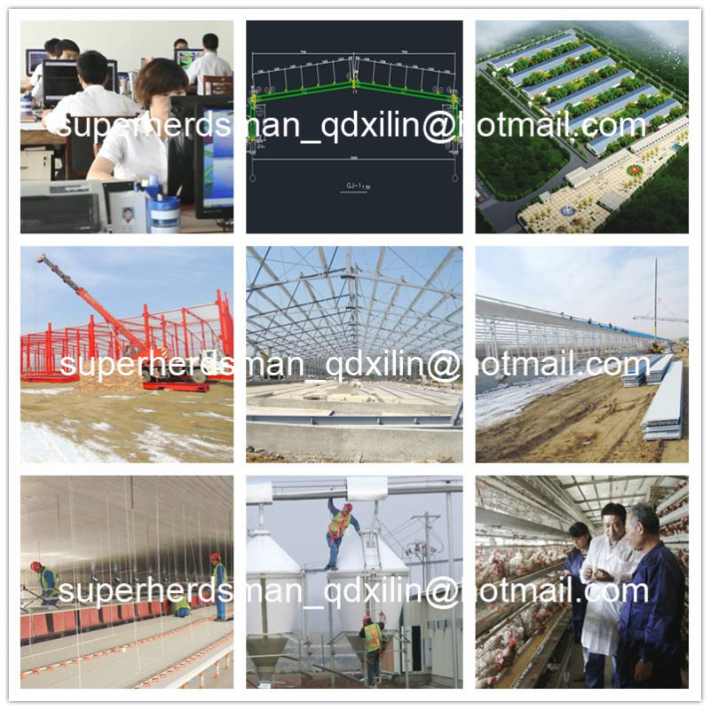 Hot Sale Automatic Poultry Farm Equipment for Broiler Breeding