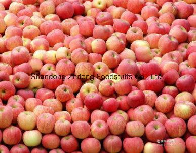 Chinese Fresh New Crop Sweet Apple