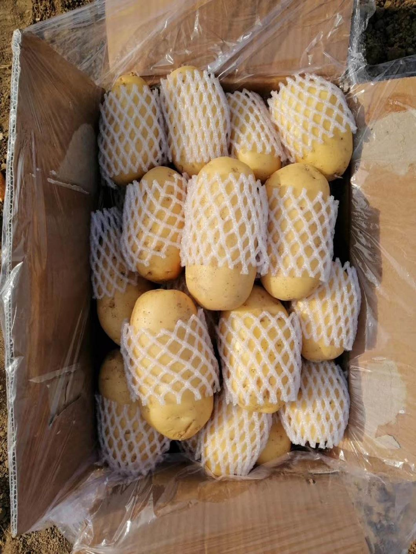 Fresh China Yellow Holland Potato