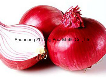 Fresh Red Onion in Shandong Province