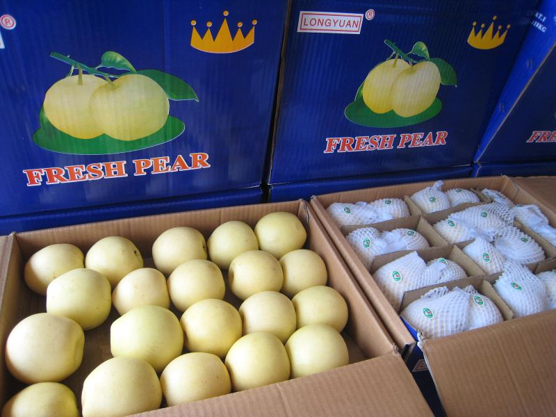 Hot Sale Good Quality Fresh Golden Pear