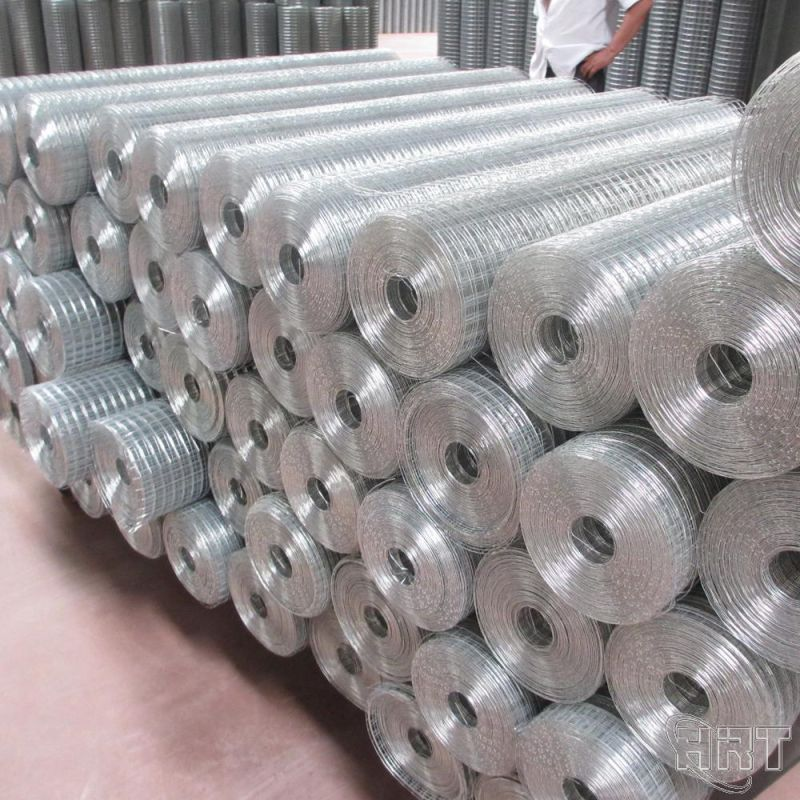 Welded Wire Mesh in Low Price