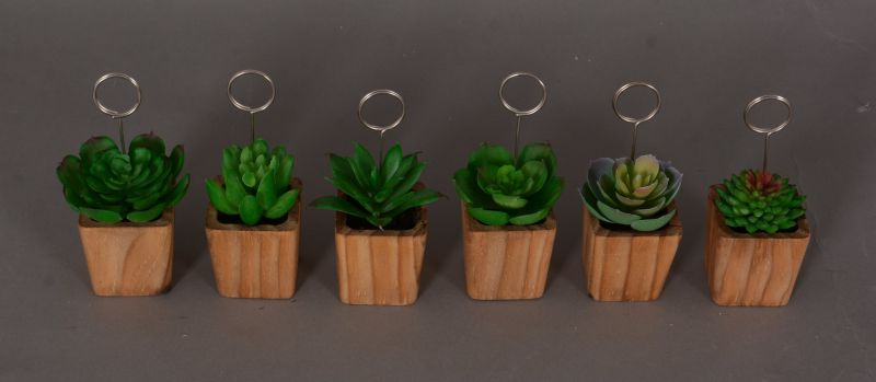Mix Succulents for Home and Office Decoration in Hanging Glass with Saft Packing (18-HF3903)