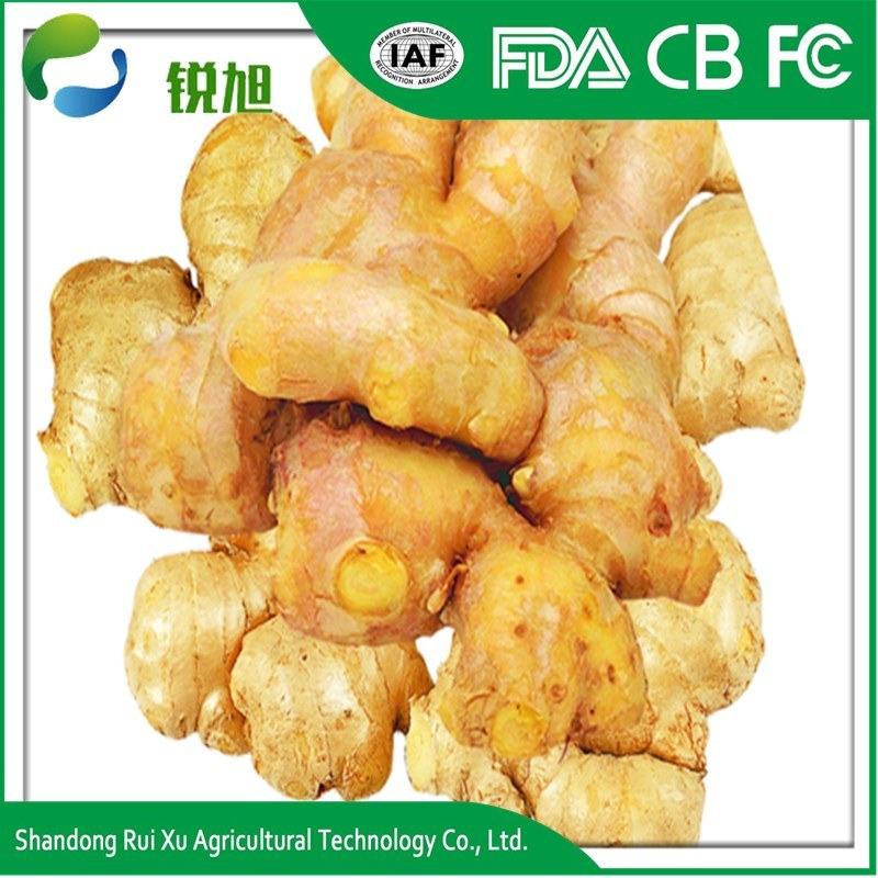 Wholesale Organic Fresh Ginger Price From Shandong