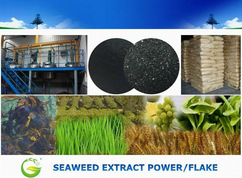 Organic Water Soluble Fertilizer Seaweed Extract