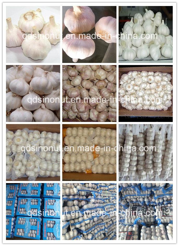 2016 Crop Fresh Garlic