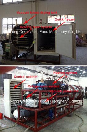Vacuum Freeze Dryer for Pet Meat/Fish