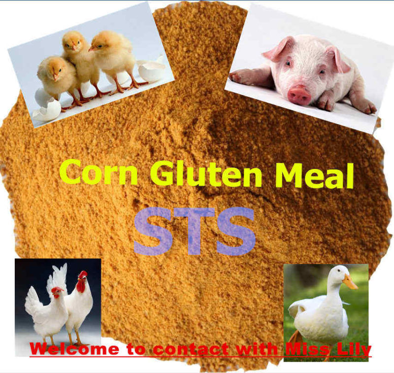 Corn Gluten Meal for Chicken Feed (protein 60%) with Lowest Price