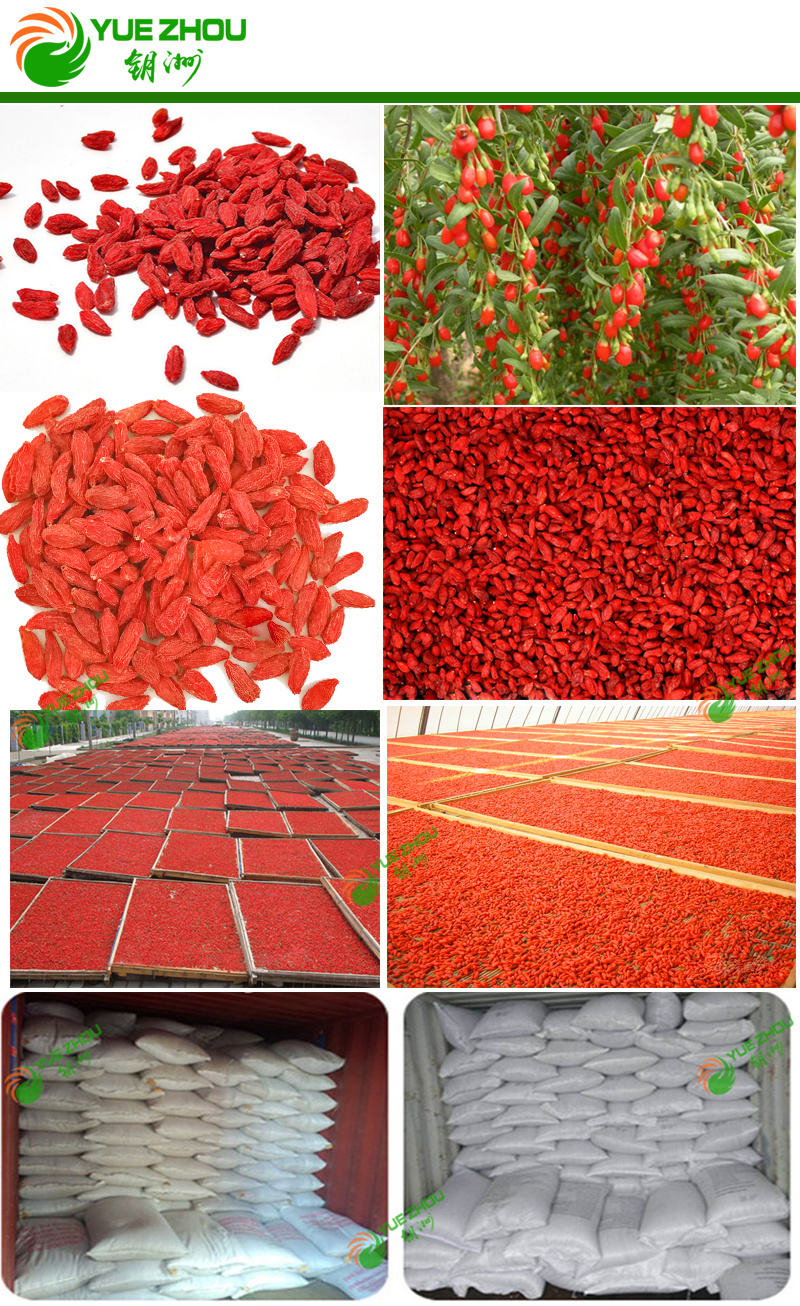 China Goji Organic Goji Berry 160 PCS Per 50g