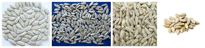 Supply All Kinds of White Sunflowers Seed Kernels No Shell New Crop