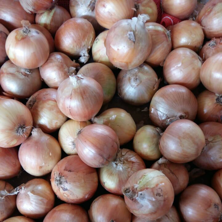 Professional Supplier of Chinese Fresh Yellow Onion