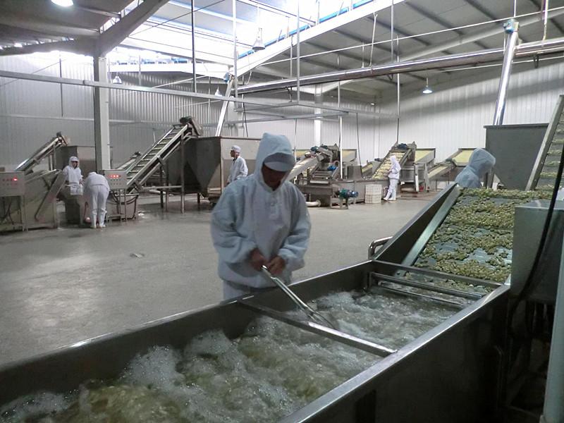 Dehydrated Garlic Granule 8-16 Mesh