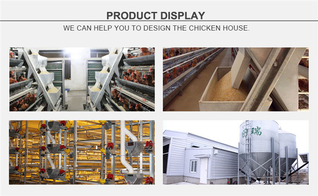 Automatic Poultry Farm Bird Feeding Equipment for Broiler