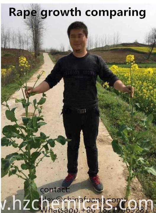 Plant Crop Growth Regulator 6-Benzylaminopurine 99% Tc 6-Ba