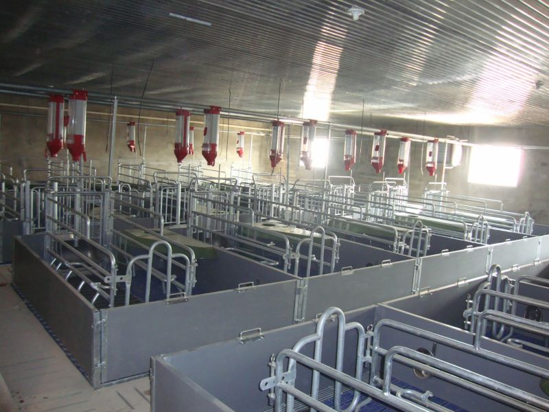 Plastic High Quality Farrowing Crates for Sow Pig Cage
