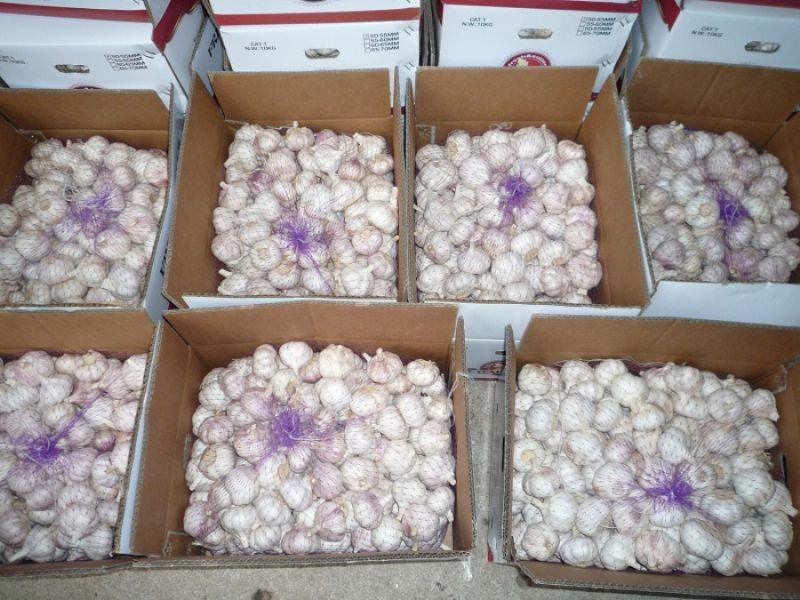 2016 Chinese Fresh Normal White Garlic 5.5-6cm