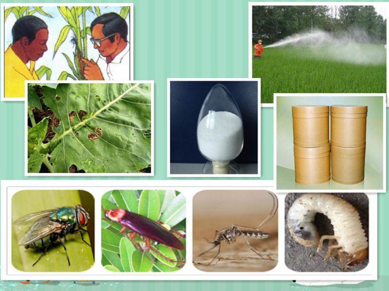 Mosquito Larvicide Ddvp Pesticide Insecticide Dichlorvos