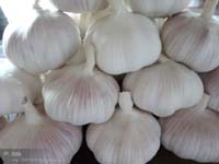 2015 New Crop Chinese Fresh Garlic