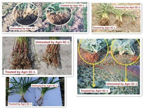 Agri-Sc Soil Conditioner for Soil Improvement and Root Growth Well and Yield Increased