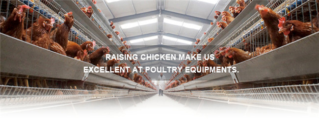 Chicken Farm Project Automatic Poultry Farming Equipment For Sale