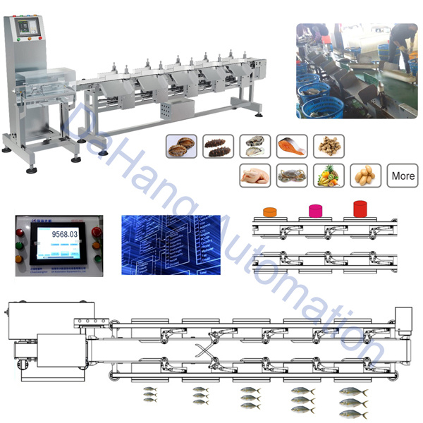 Sea Cucumber Weight Sorter Machine