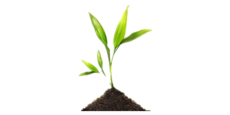 Organic Manure manufacture with Amino Acid added Plant Promoter