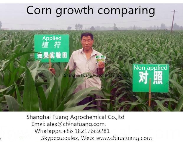 Plant Growth Promotor Hormones Pgr Abscisic Acid