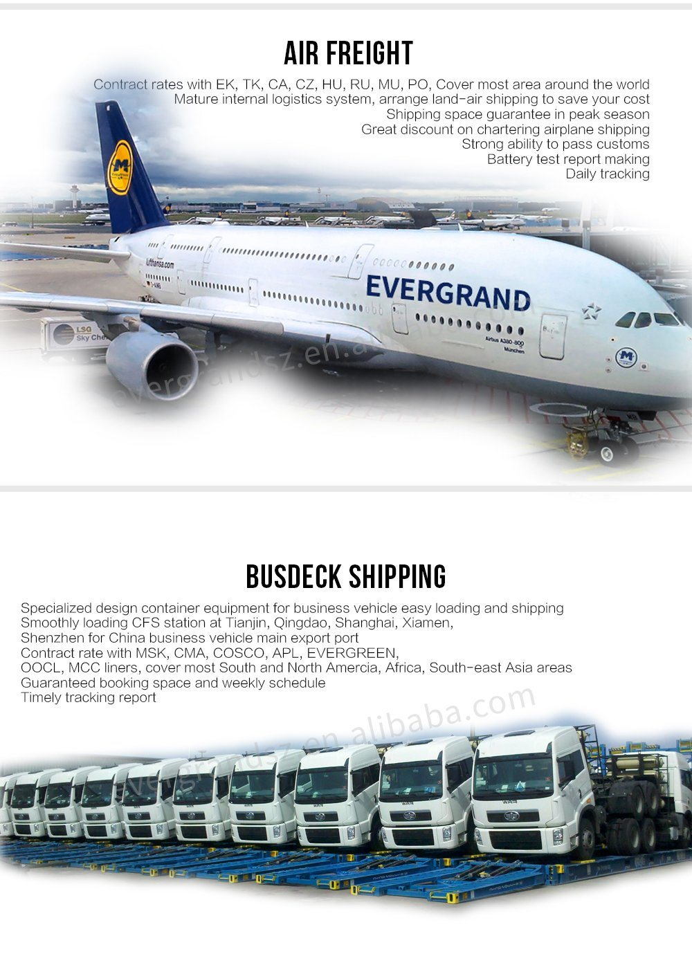 China Reliable Shipping Agent to Egypt/Cairo/Port Said/Alexandra/Sokhna