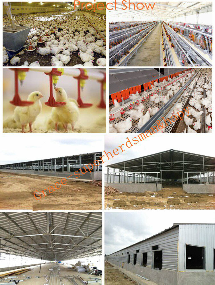 Floor Breeding Broiler Proeuction Poultry Equipment