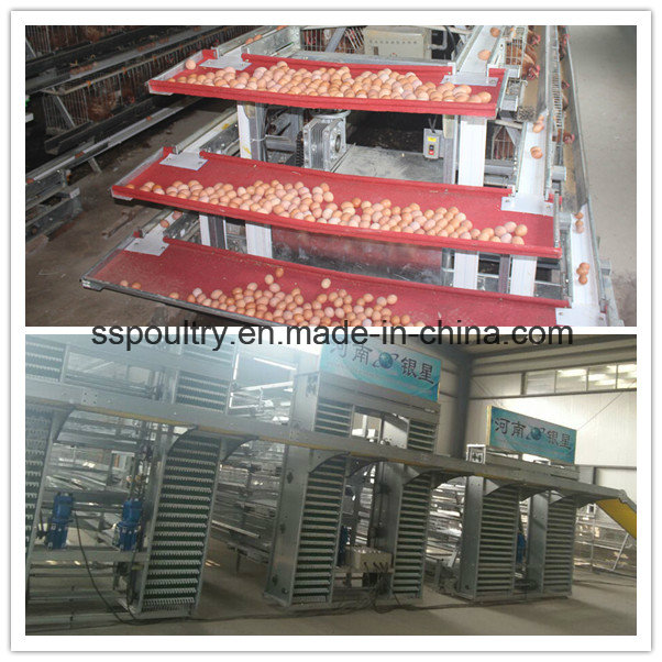 Poultry Cage / Bird Cage / Chicken Cage